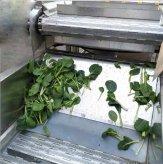 商用蔬菜气泡清洗机  茎类蔬菜毛辊清洗机